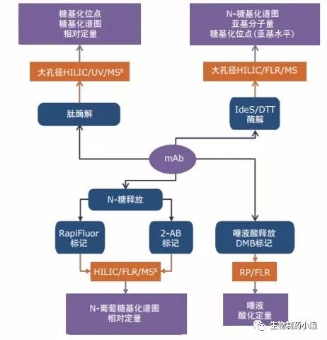 而肽图分析可用于确定糖基在蛋白质上的精确位置.